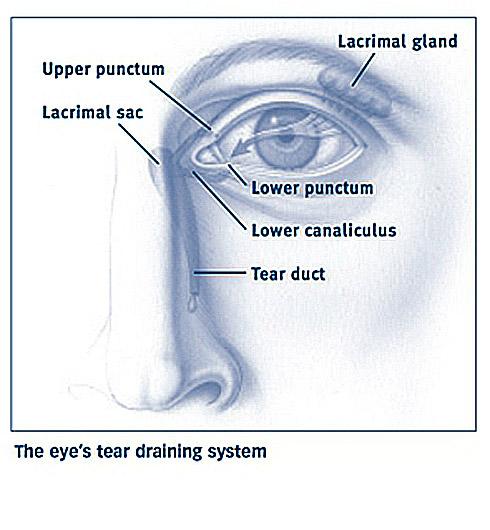 鼻淚溝示意圖