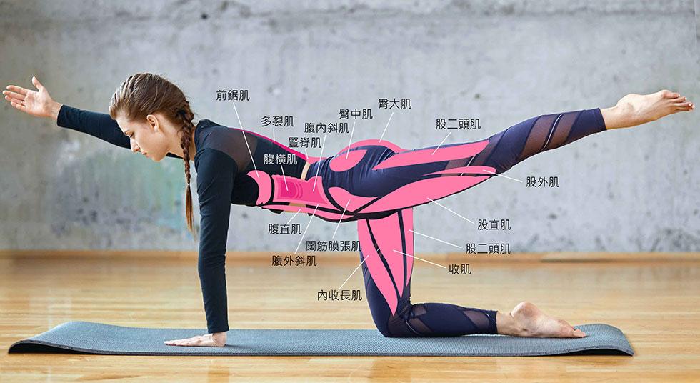 「核心肌群」主要由腹直肌、腹斜肌、下背肌、豎脊肌等組成。